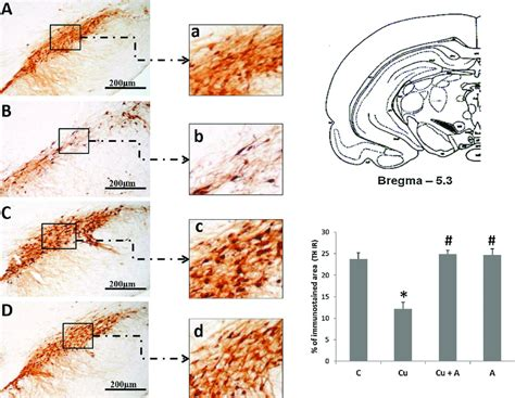 Light micrographs of frontal sections through substantia