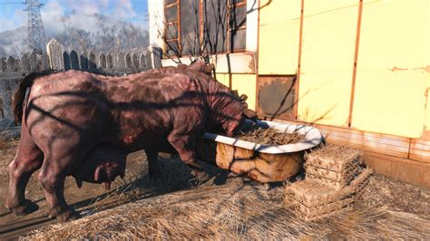 Filled Brahmin Feed and Water Troughs at Fallout 4 Nexus